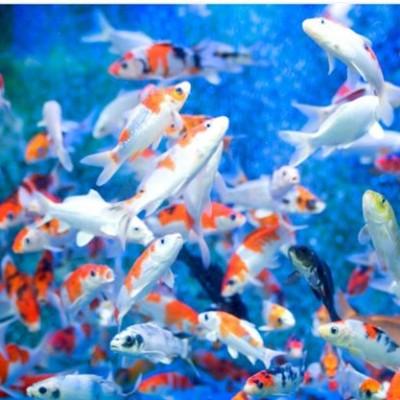 red sea tour