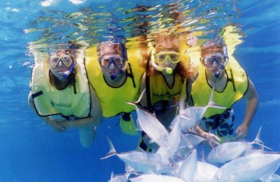 Red Sea and Diving Packages